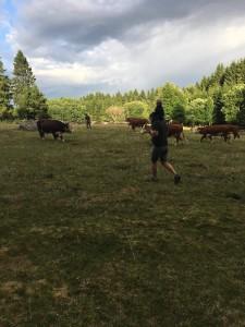 Algot hjälper gärna pappa och farfar på gården. Vår egen lilla Lill-bonde!